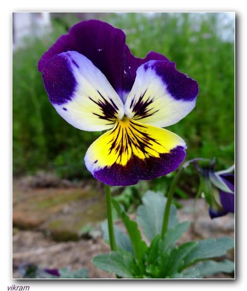 Full Bloom by Bantu