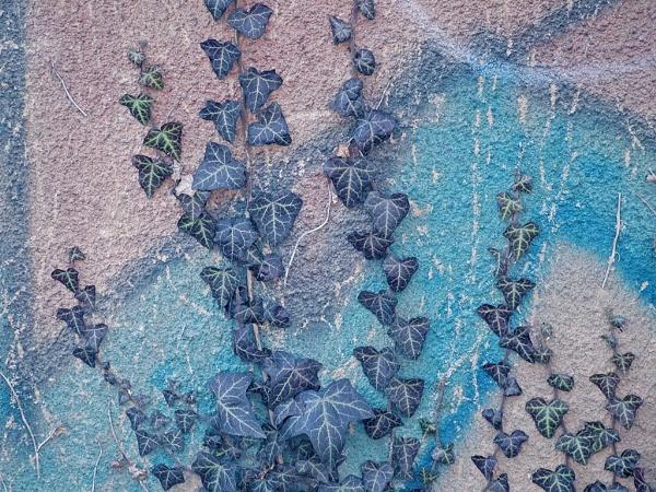 ivy by LaoCe