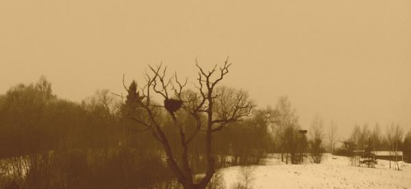 The nest by SauliusR