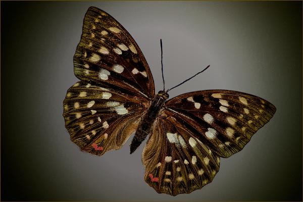 My Dad Was A Caterpillar by Big_Beavis