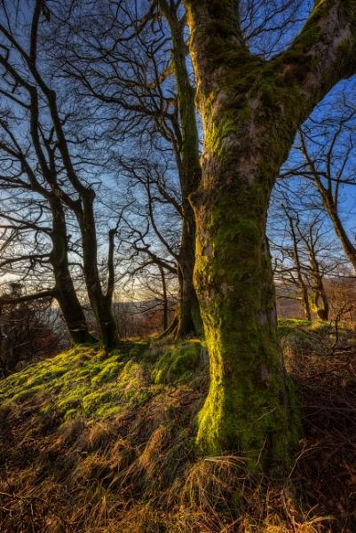 Woodland Light by douglasR