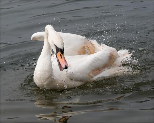 Splashing about. by franken