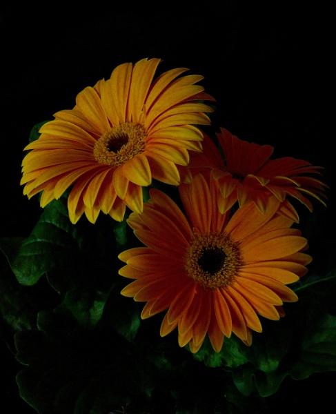 Flower in my kitchen