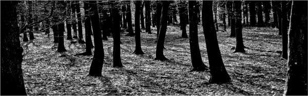 Forest Floor by Kurt42
