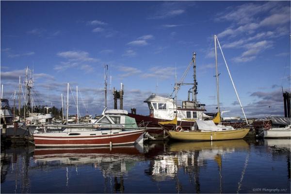Sailboats and Fishboats by Daisymaye