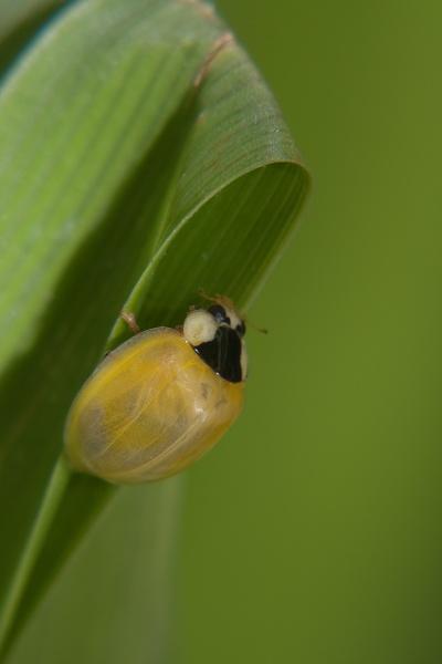 Ladybird by EddieDaisy