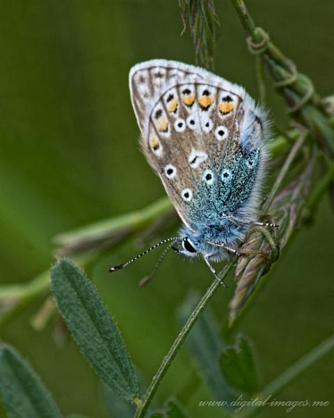 Blue by Alan_Baseley