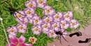 Wood Green Bugs! by Chinga