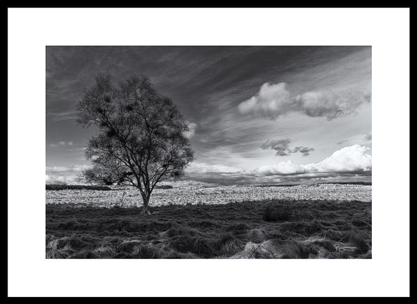 Alone by Roymac