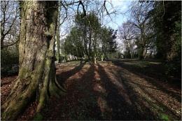 Tyldesley Landscape