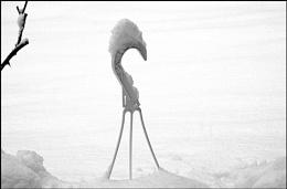 *** Snowbird ***