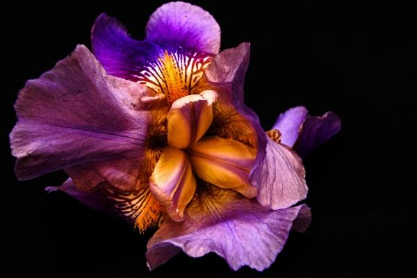 Orchidaceae by maxrastello