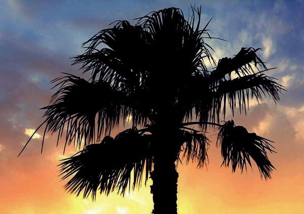 Date Palm Tree by AyeshByesh