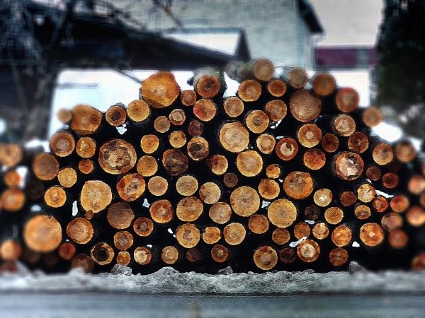 Firewood by Zenonas