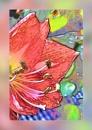 Amaryllis by Joline