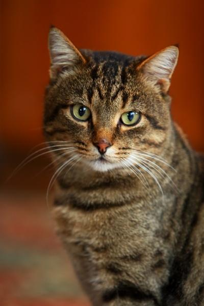 Cat by xenija