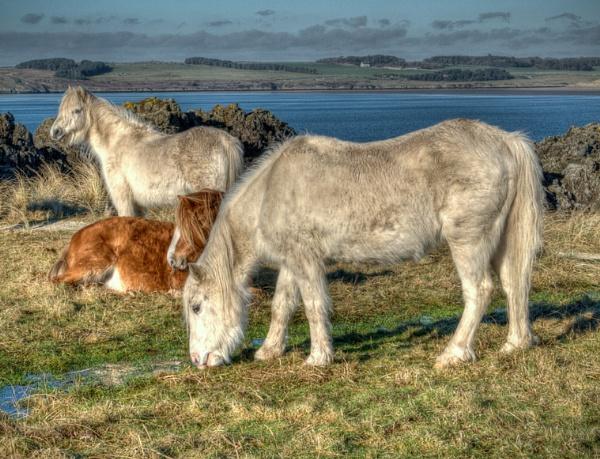 Wild Horses by PRE99