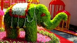 """ THE ELEPHANT """
