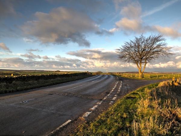 The Tinsel Tree by ianmoorcroft
