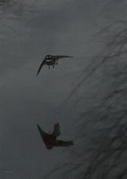 Fantail over Chrystall's Lagoon (0018)