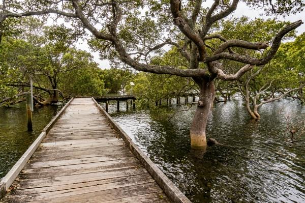 Mangrove boardwalk by Toni29
