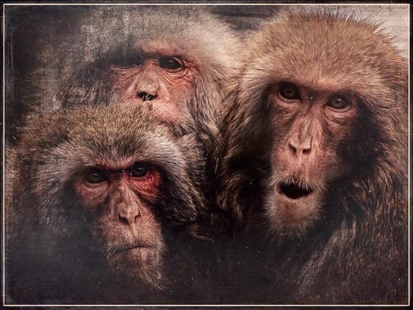 Trio by StrayCat