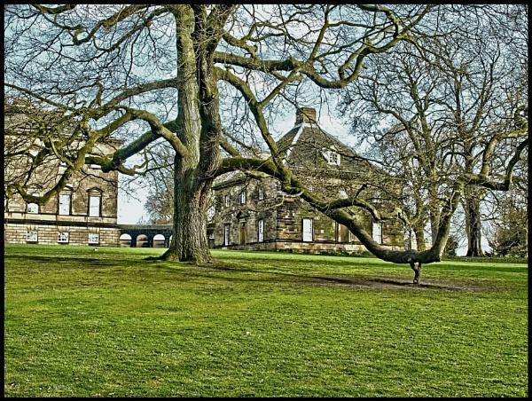 CROOKED TREE by kojack