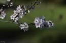 Blossom time by pentaxpatty