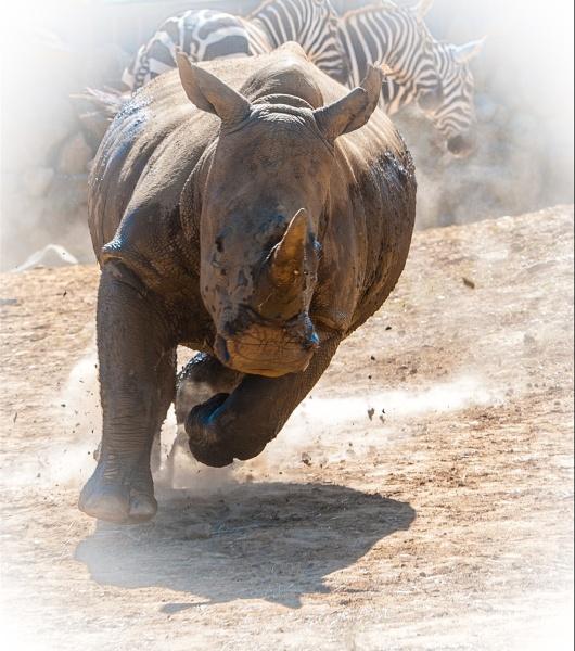 Rhino by 10delboy