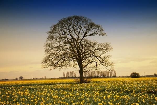 Tree by chrisbryan