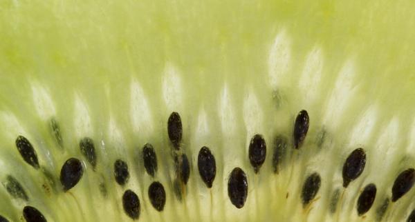 Kiwi seeds by lespaul