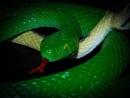 A Snake for a Snake by DaveRyder