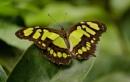 Butterfly 1 by jasonewell