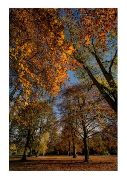 Autumn Canopy by BigAlKabMan