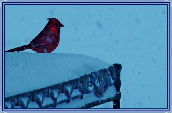 *** Enjoying the Snow Storm *** by Spkr51