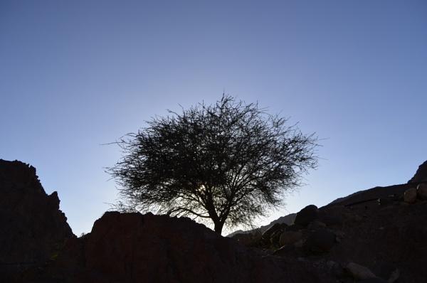 Wadi Dana by faisalzeben