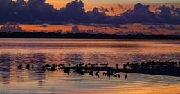 Migratory Bird Roost