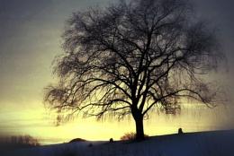 Winter Willow Sunset
