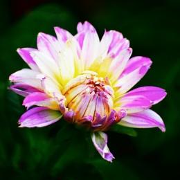 Blooming..