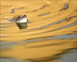 On golden pond...