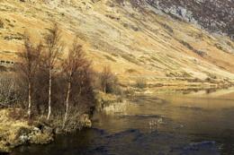 Lochside Trees