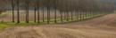 Trees by marktc