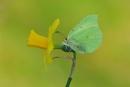 welkom spring by ruurd