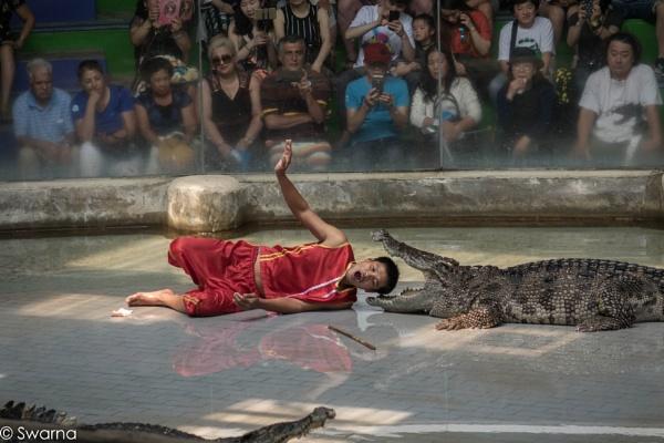 Crocodile Show - Sriracha, Pattaya Thailand by Swarnadip