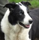 Jess, the farm collie by JuBarney