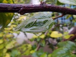 A rain drop
