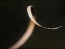Curl by civitas