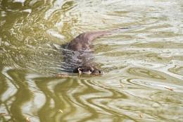 Photo : Otter 1