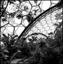 Eden by ljesmith