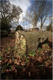 Woodland Decay